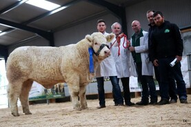 Tougher than anticipated at autumn pedigree sales