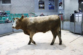 Beef trade starts the year on firm footing