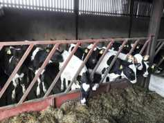 Keeping on top of calf health this winter