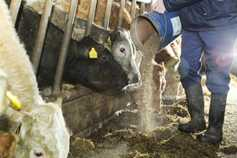 Farmers fear feed price increases unecessary