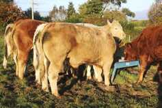 £10/t increase in cattle feed prices