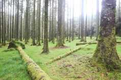 Forestry meeting in Leitrim on Friday night