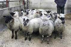 Strong prices for cattle and sheep at Kilrea Mart