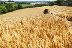 Global grain harvest forecast nears record level