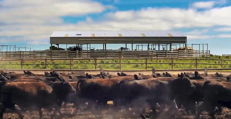It comes with 2,000 cattle and 2,500 ewes \ Duncan McKenzie (YouTube)