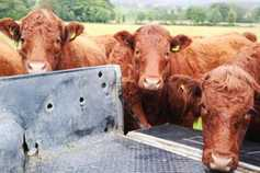 UK beef exports fall