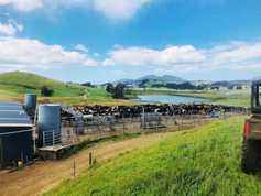 Farmer Writes: starting from scratch in Tasmania
