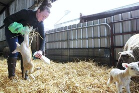 Safe Family Farms: Mind your health in lambing season