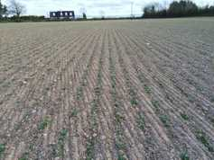 Tillage management: land conditions, markets and planting
