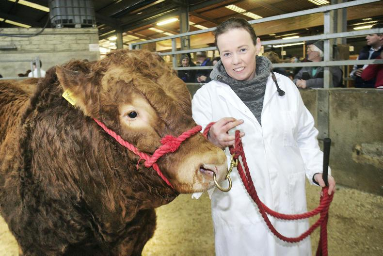 Christina Loughran from Cookstown with the senior bull class winner at the spring show and sale of Limousin cattle in Dungannon. \ Houston Green