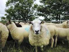 Cost of livestock worrying quadruples