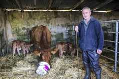 My farming week: Jimmy Flynn, Taughmaconnell, Co Roscommon