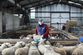 Long read: no silage left for sheep? Then let them eat concentrates