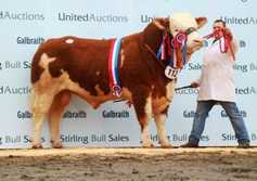 Islavale Hugo 16 claims Stirling Simmental championship