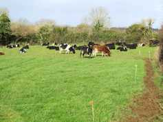 Monday management: week three of calving – what to do now