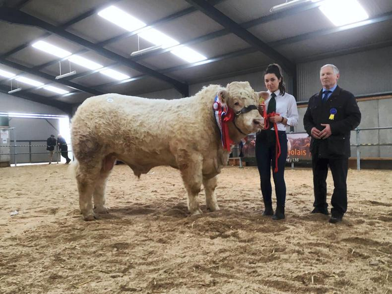 Champion bull at the Irish Charolais Cattle Society sale in Tullamore on Sat 17th Feb 2018 bred by Matt Ryan, Tipperary. Sired by Goldstar Echo he was sold for €9000
