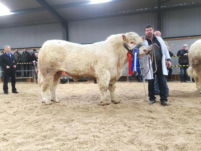 Reserve Champion at the Irish Charolais Cattle Society Sale in Tullamore on Sat 17th Feb 2018 with breeder Thomas McLaughlin. Sire: Tombapik. Sale price: €6400