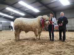 Watch: flying trade for Charolais bulls in Tullamore