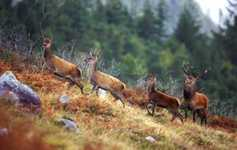 Recreational hunting inadequate to control deer population
