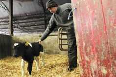 Farmer Writes: preparing for the storm, calving and grazing