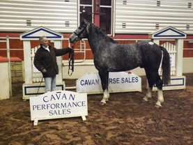 €10,000 paid for draught stallion and pony at Cavan