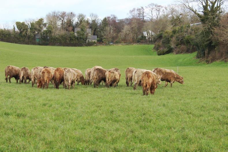 Store cattle were turned out to grass on 8 March.