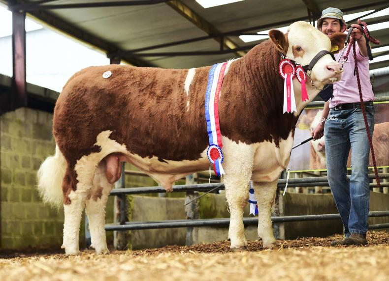 Junior champion and top-priced bull Clonagh Just A Dream, which sold for €12,500. \ Alfie Shaw