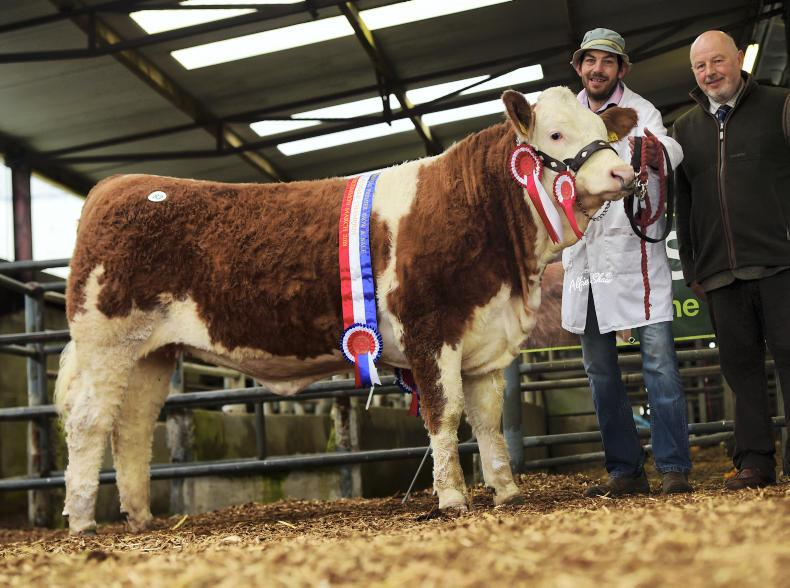 Female champion and top-priced female Clonagh Jazzy Eyes, which sold for €6,100. \ Alfie Shaw