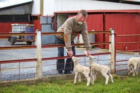 This week in photos: Dungarvan Mart, feeding lambs and cattle