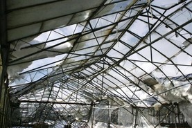 Horticulture sector needs support to get over storm damage