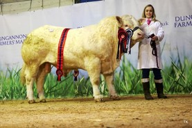 Muckian takes top spot at Charolais show and sale in Dungannon
