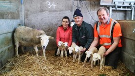 Watch: ewe gives birth to six healthy lambs in Teagasc Athenry