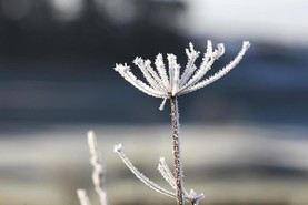Weekly weather: severe frost to give way to warmer temperatures