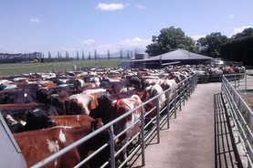 Monday dairy markets: New Zealand milk production falls again