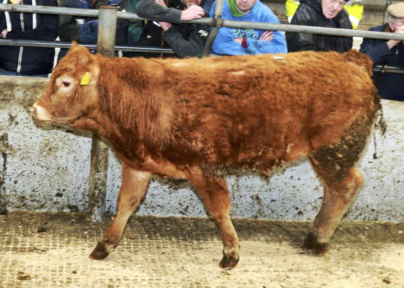 This Limousin bull, born March 2017 and weighing 415kg, sold for €1,010 (€2.43/kg).