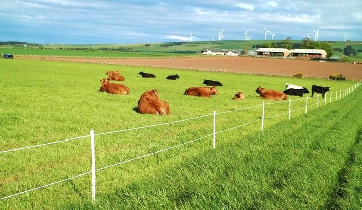 Farm Profit Programme: 10 changes that increased gross margins on the focus farm