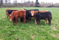 Keep on top of indoor cattle management