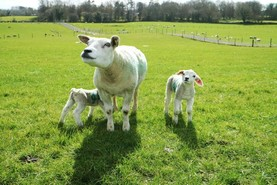 Extra €217/ha possible from using five-star animals