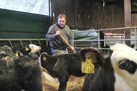 Silage, stock bulls and breeding programmes in Kildare