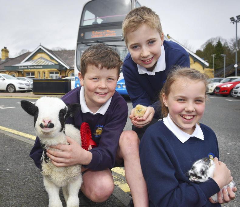 Matthew, James and Ellie, from Ballymacash primary school, join some farmyard friends from The Ark Open Farm to announce Translink's transport plans for this year's show.\ Aaron McCracken