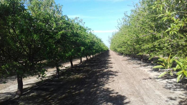 Almond production is booming in California.