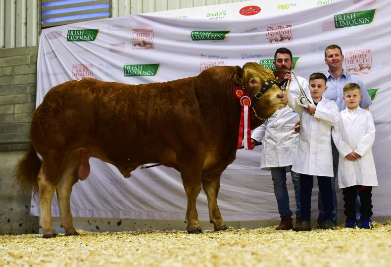Senior champion and top-priced animal Logrea Mr Muscle, which sold for €6,750. \ Alfie Shaw