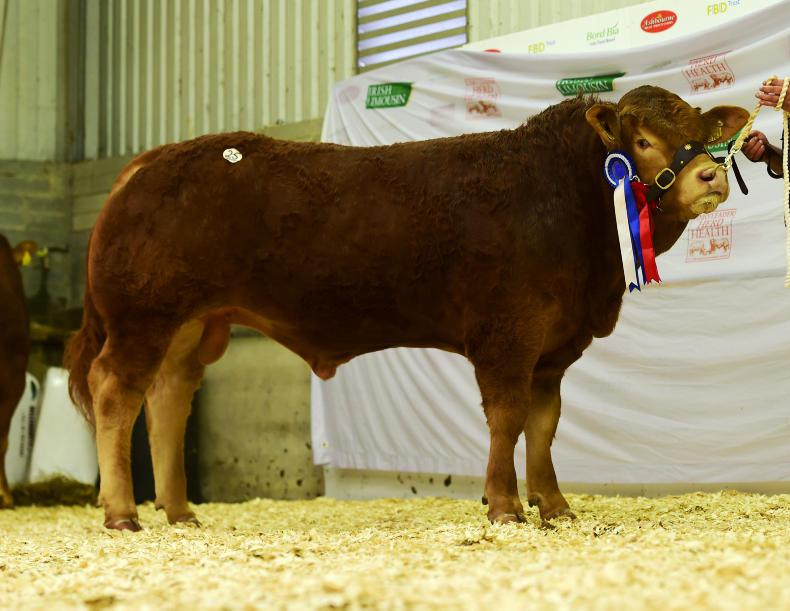 Reserve senior champion Birchpark Mighty Mouse. \ Alfie Shaw