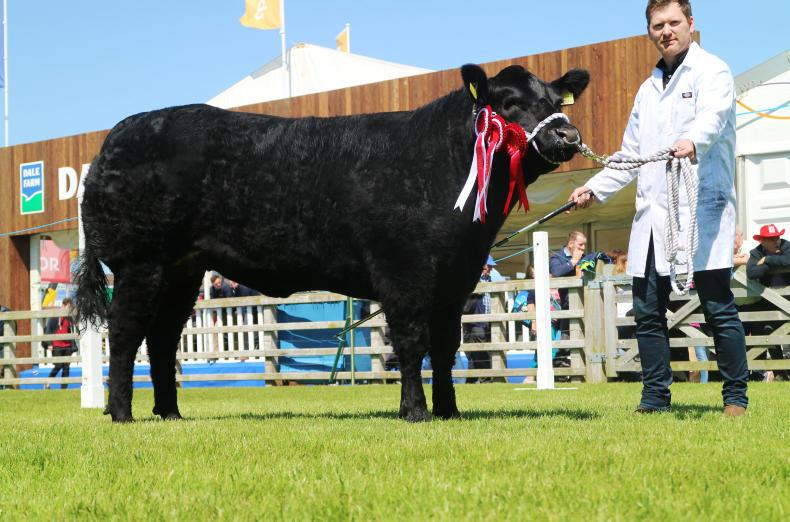 Reserve supreme and reserve female commercial champion Posh Spice.