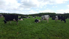 Getting back to basics with dairying