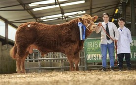 In pictures: €5,000 call leads Roscommon Limousin sale