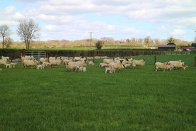 New yard in Wicklow for sheep exports