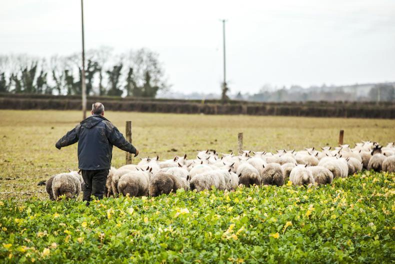 Irish Farmers Journal breakfast bulletin: farm deaths and