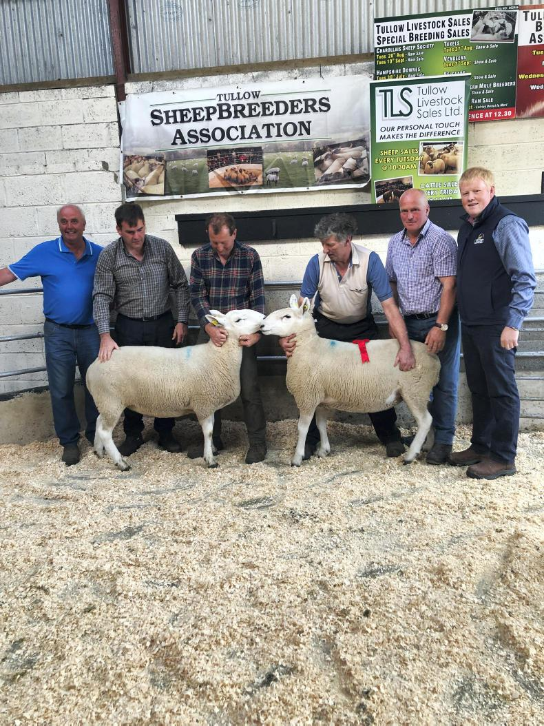 Tullow sheep breeders holding their heads high 23 July 2019 Free