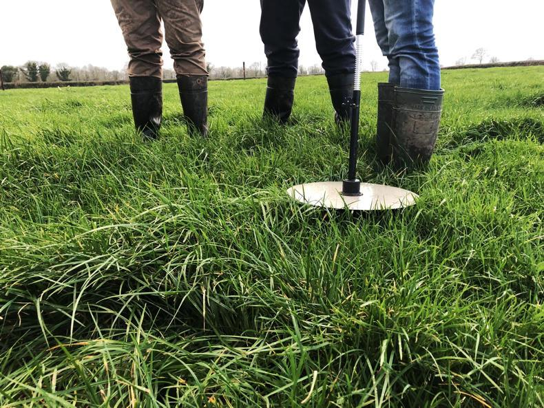 Grass+ beef: wet weather brings an autumn feeling 14 ...